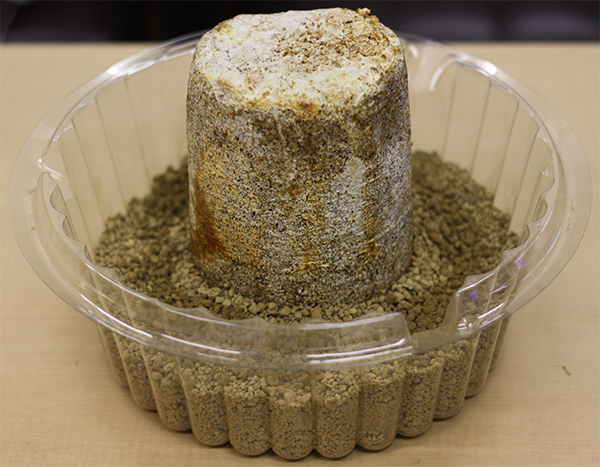 栽培容器になめこの菌床を置いた所